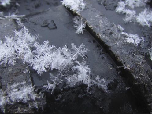 SnowFlakesStreet
